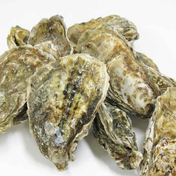 統合失調症と竜骨牡蛎の関係_論文発表