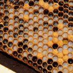 生薬-蜂蜜